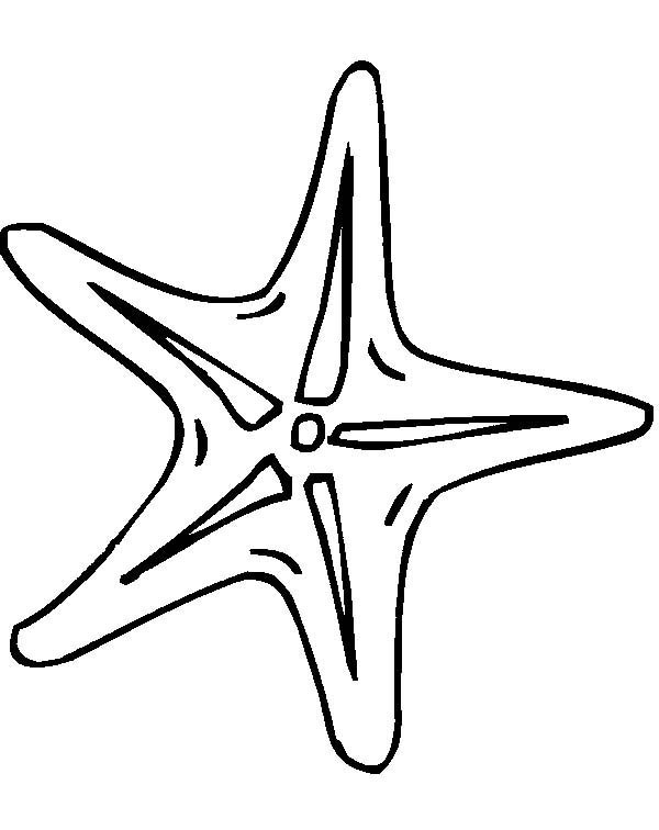 Small Starfish Drawing Starfish Coloring Page