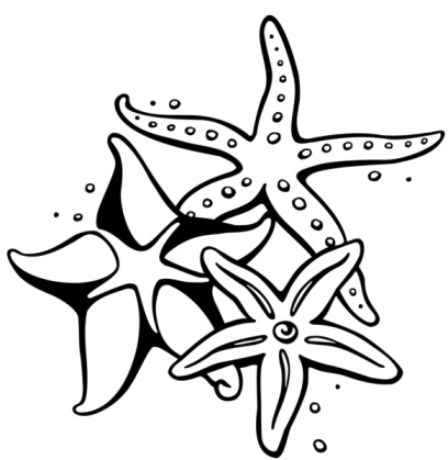 starfish drawing pencil clipart panda free clipart images. Black Bedroom Furniture Sets. Home Design Ideas