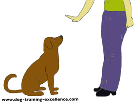 Sit And Stay Dog Training
