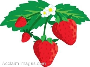 Strawberry Plant Clipart