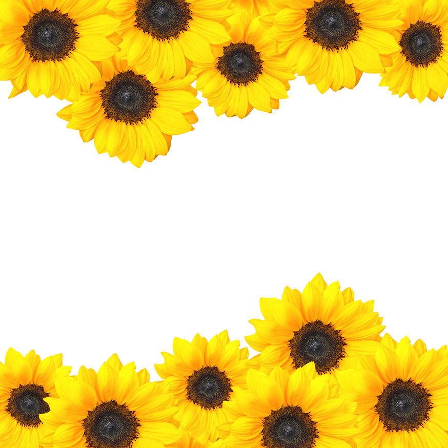 Sunflower Border Design | Clipart Panda - Free Clipart Images