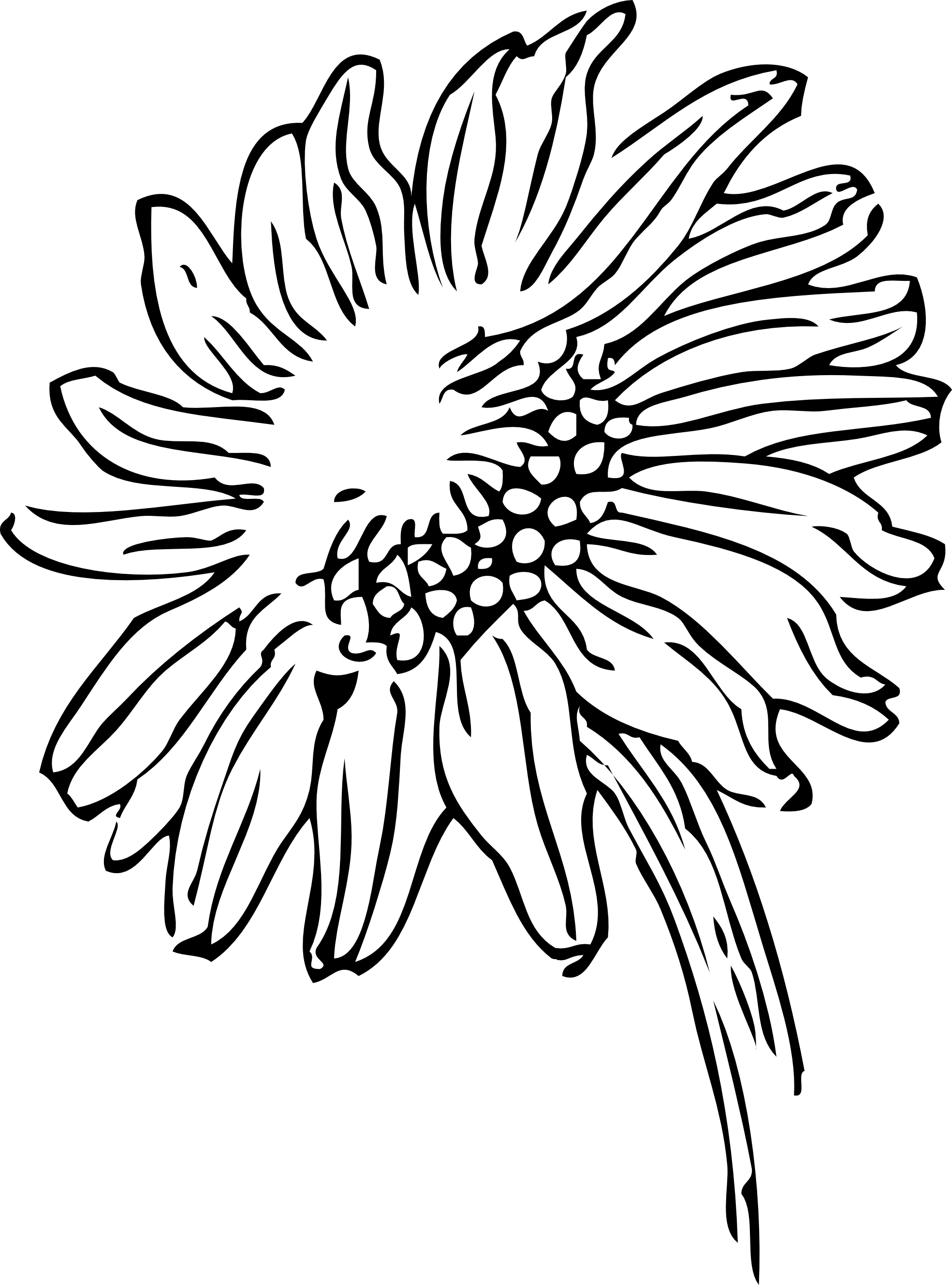 Drawing Lines Using Svg : Sunflower drawing black and white clipart panda free