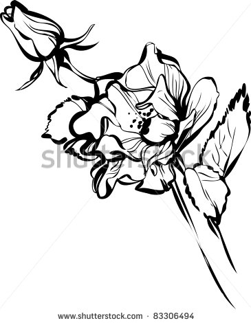 Black and white flower drawing clipart panda free clipart images sunflower20drawing20black20and20white mightylinksfo