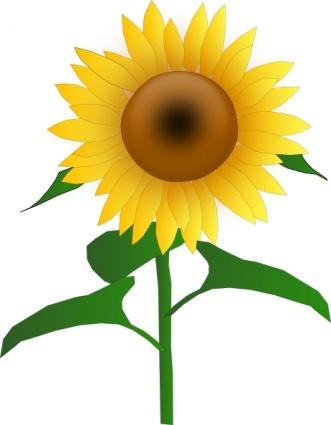 sunflowers clip art lqfnwodt clipart panda free clipart images rh clipartpanda com sunflower clipart in microsoft word sunflower clipart transparent