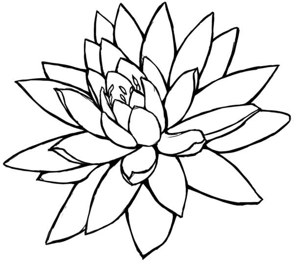 Simple Floral Line Art : Sunflower pencil drawing clipart panda free images