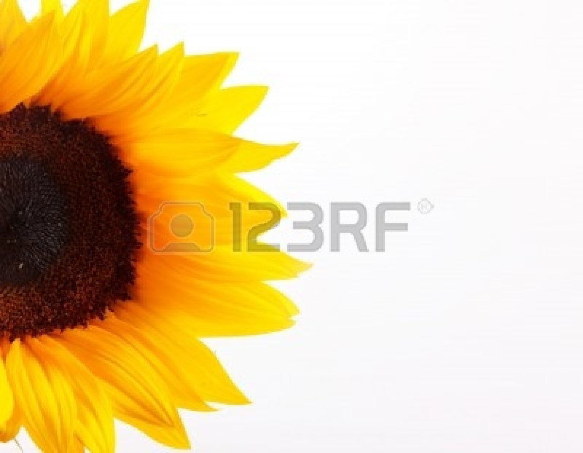 Black And White Sunflower Photography | Clipart Panda - Free Clipart ...