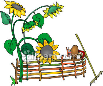 Sunflower Seed Clipart | Clipart Panda - Free Clipart Images