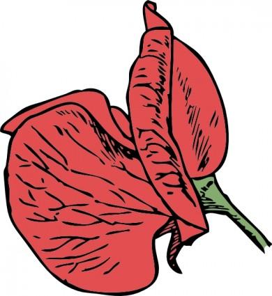 Sweet Pea Flower Clip Art