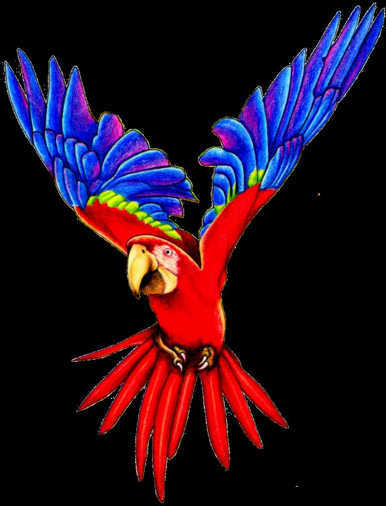 Talking Parrot Clipart | Clipart Panda - Free Clipart Images