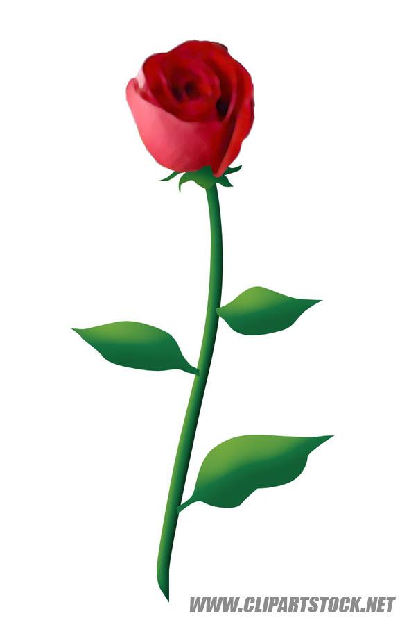 rose border clipart  flower