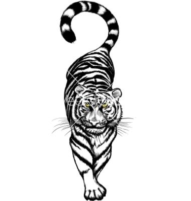 tiger-clip-art-black-and-white-black-and-white-crouching-tiger-vector ... Tiger Face Black And White Clipart