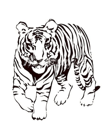 Clip Art Tiger Clipart Black And White tiger face clip art black and white clipart panda free clipart