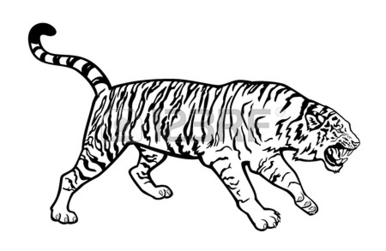 Line Drawing Of A Tiger S Face : Tiger eyes black and white clipart panda free