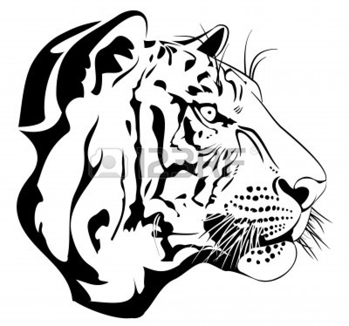 Line Drawing Of A Tiger S Face : Tiger eyes clip art clipart panda free images