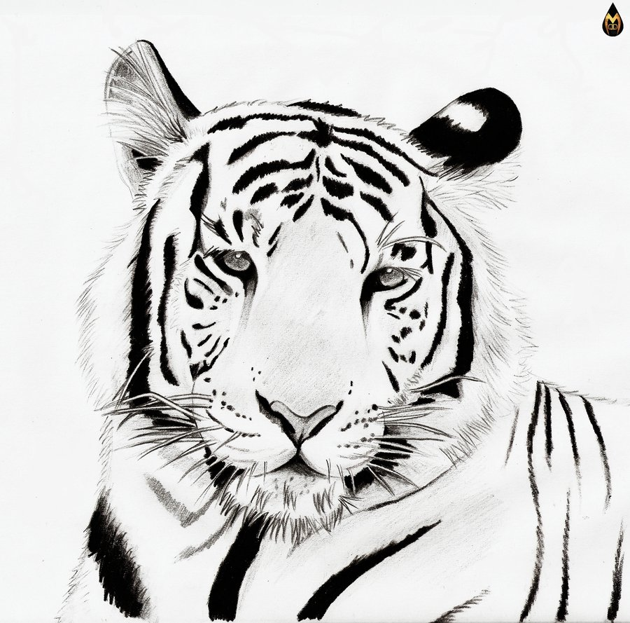 Line Drawing Of A Tiger S Face : Tiger face clip art black and white clipart panda free