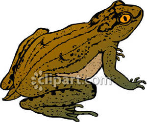 brown toad clipart panda free clipart images rh clipartpanda com free clipart of a toad toad clipart
