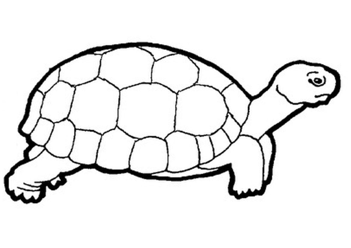 Line Art Turtle : Tortoise clipart panda free images