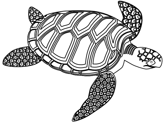 Turtle Line Drawing Tattoo : Tribal turtle clipart black and white panda