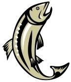 trout%20clipart