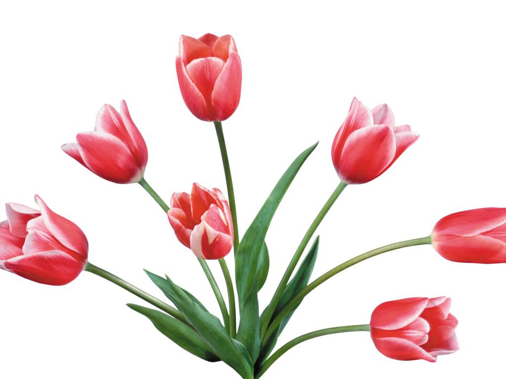 Pink Tulip Clip Art Tulip clip art