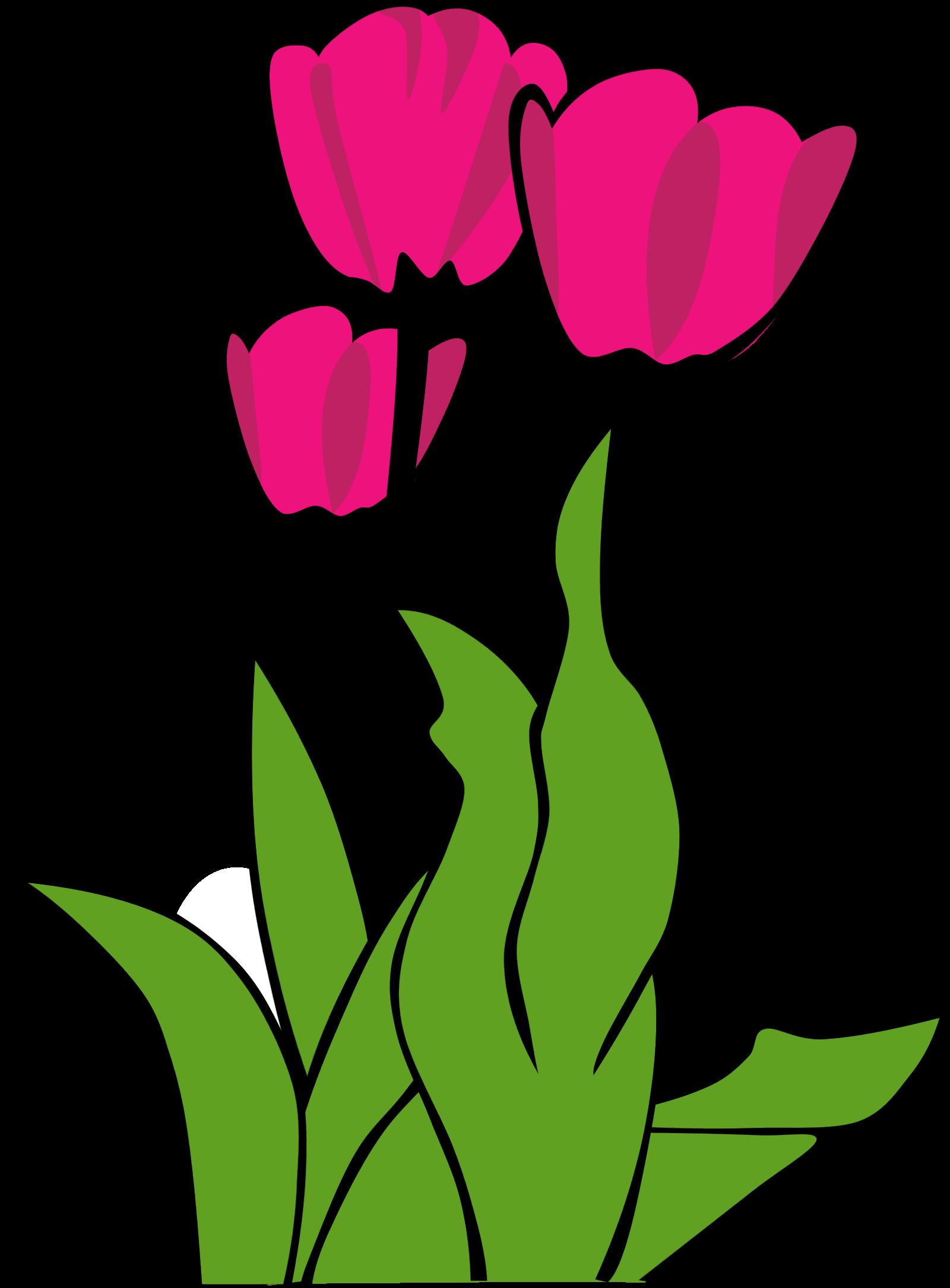 Tulip Clip Art Free   Clipart Panda - Free Clipart Images