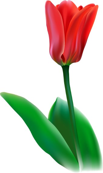 tulip flower clip art free  clipart panda  free clipart images, Beautiful flower