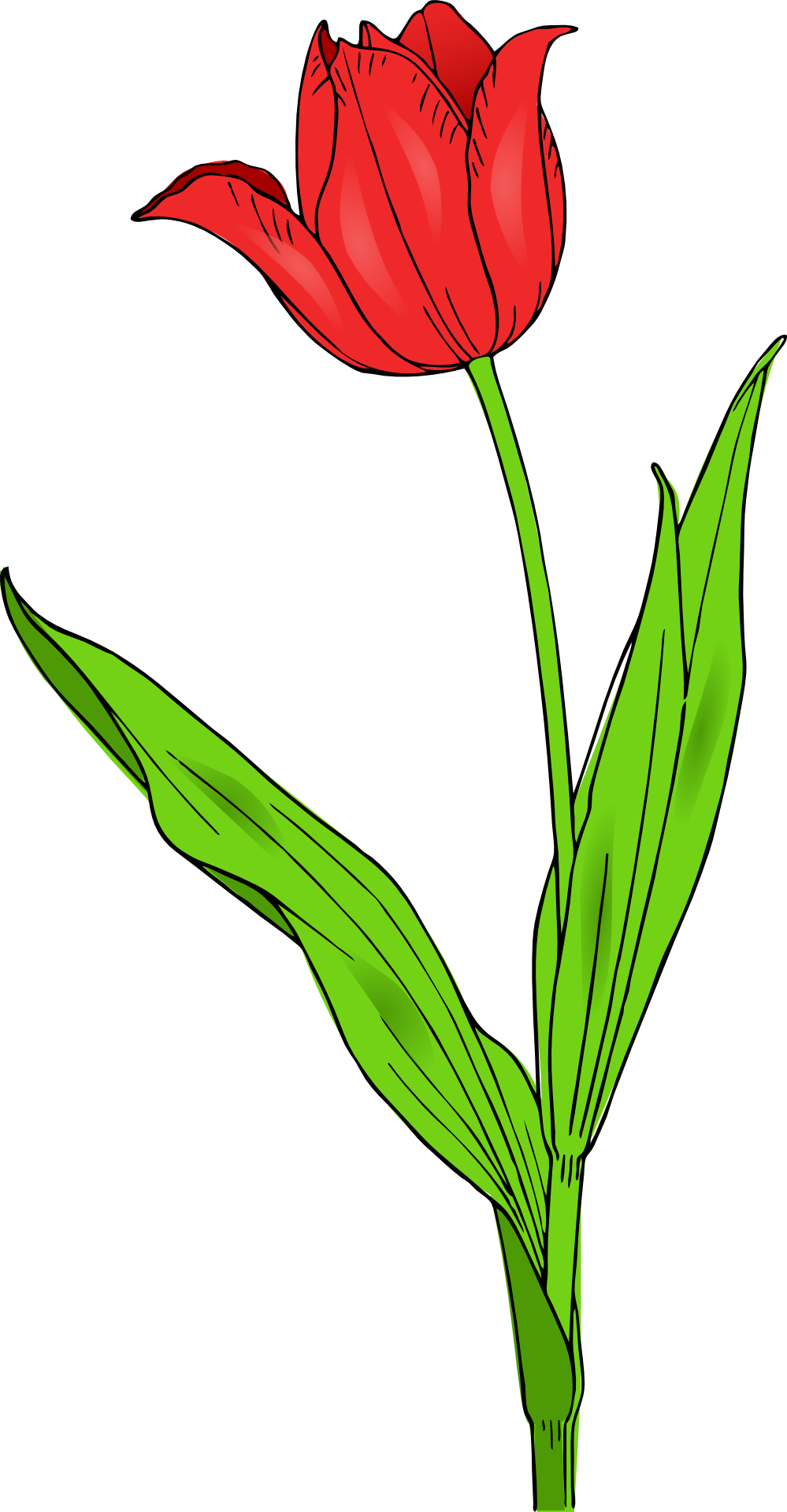 Colored Tulip Coloring | Clipart Panda - Free Clipart Images