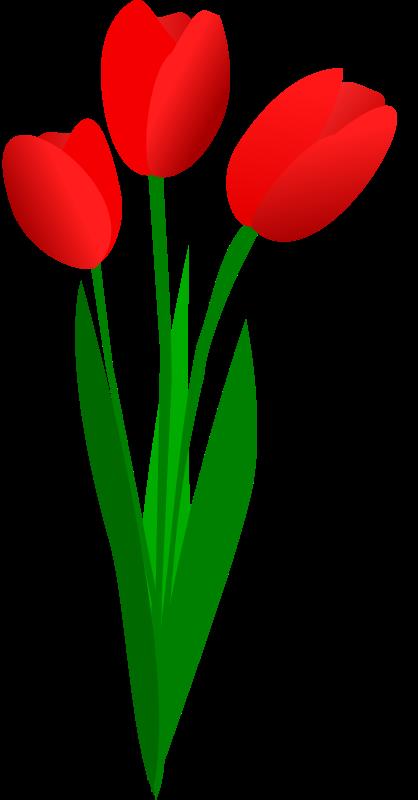 Clip Art Tulip Clip Art tulip flower clip art free clipart panda images clipart
