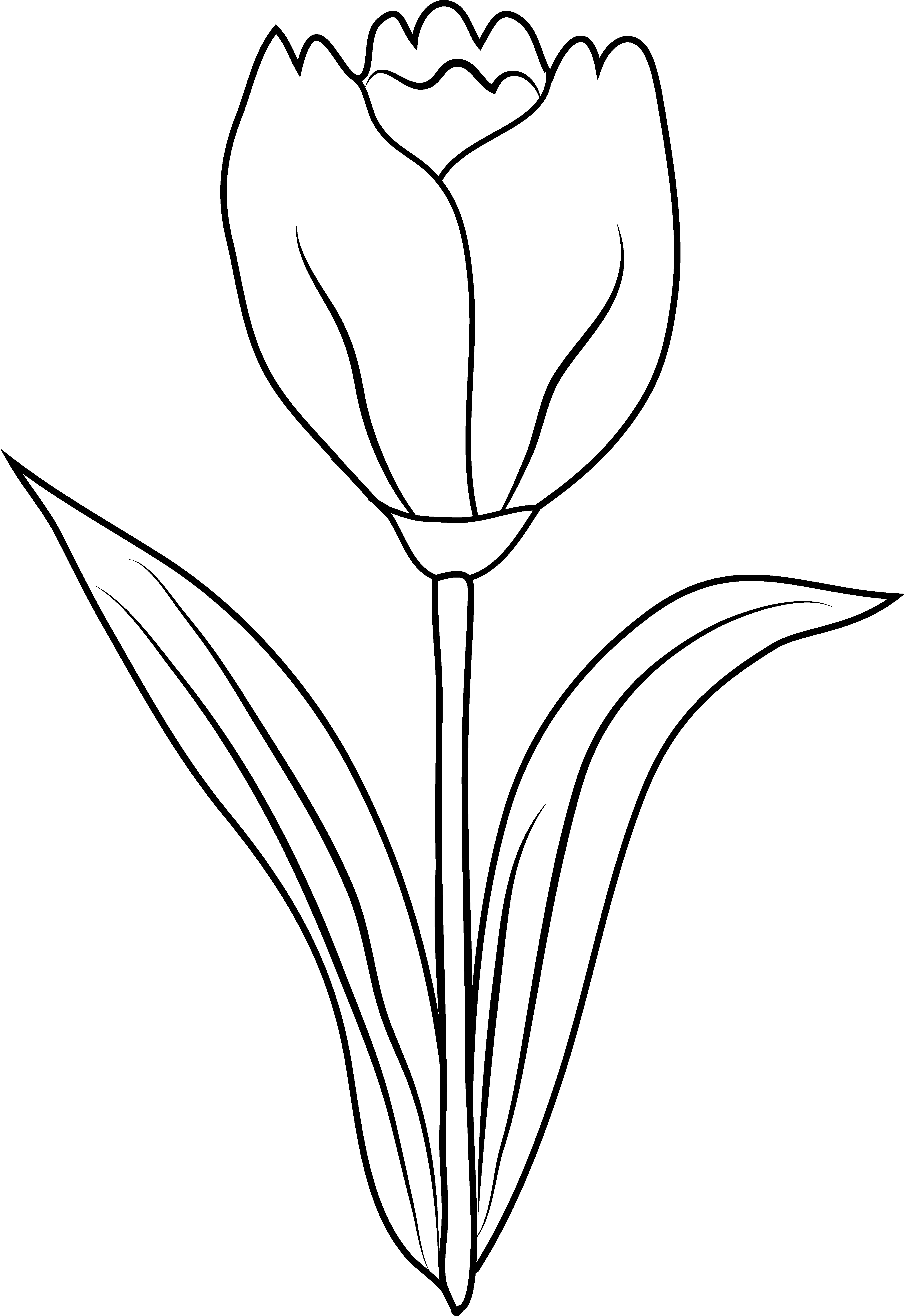 tulip%20outline%20clipart