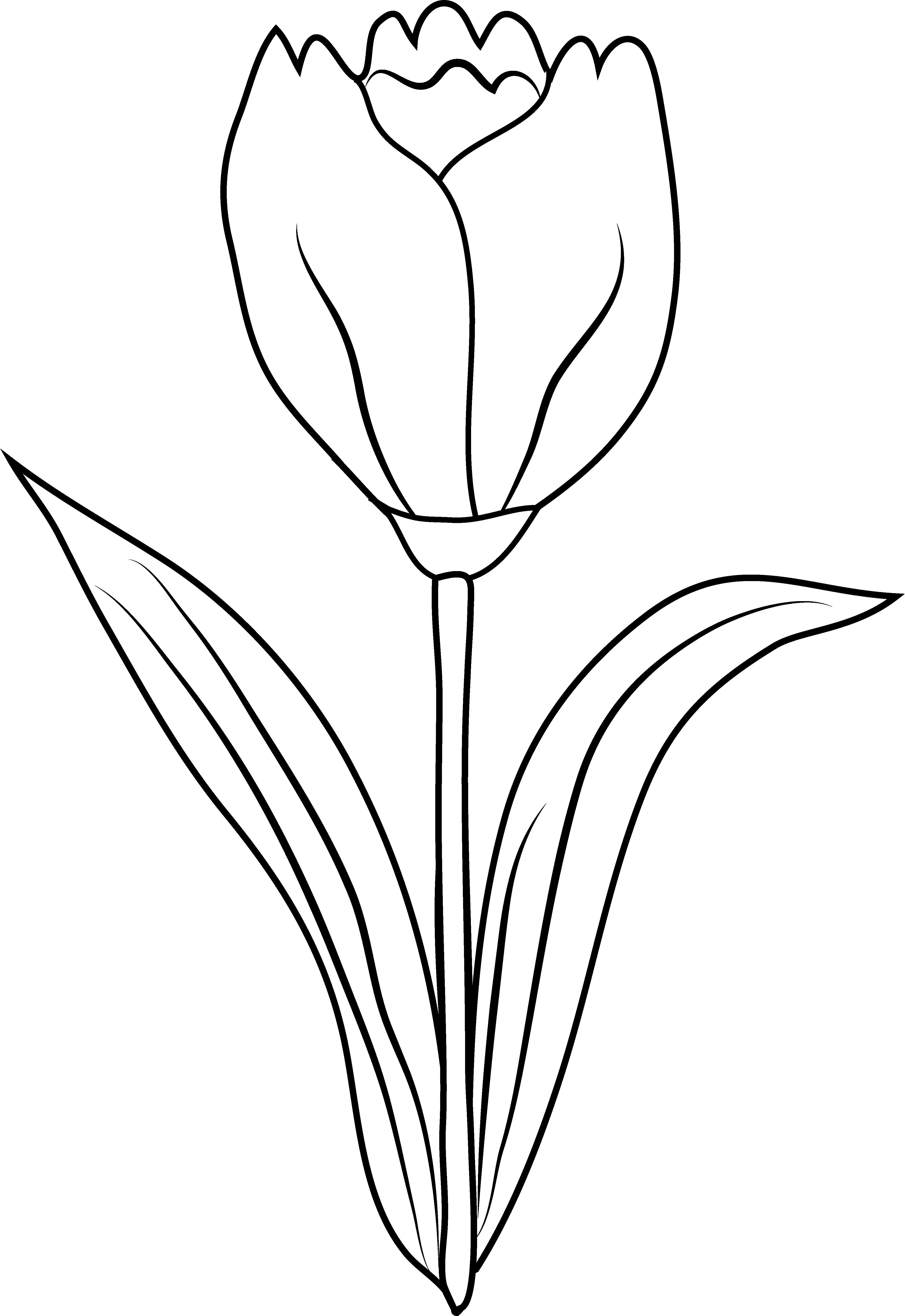 Simple Tulip Outline | www.imgkid.com - The Image Kid Has It!