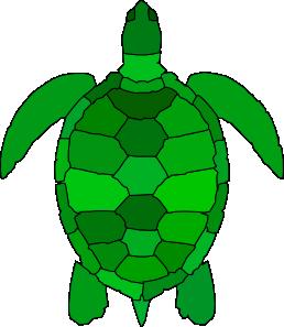 Turtle Clipart