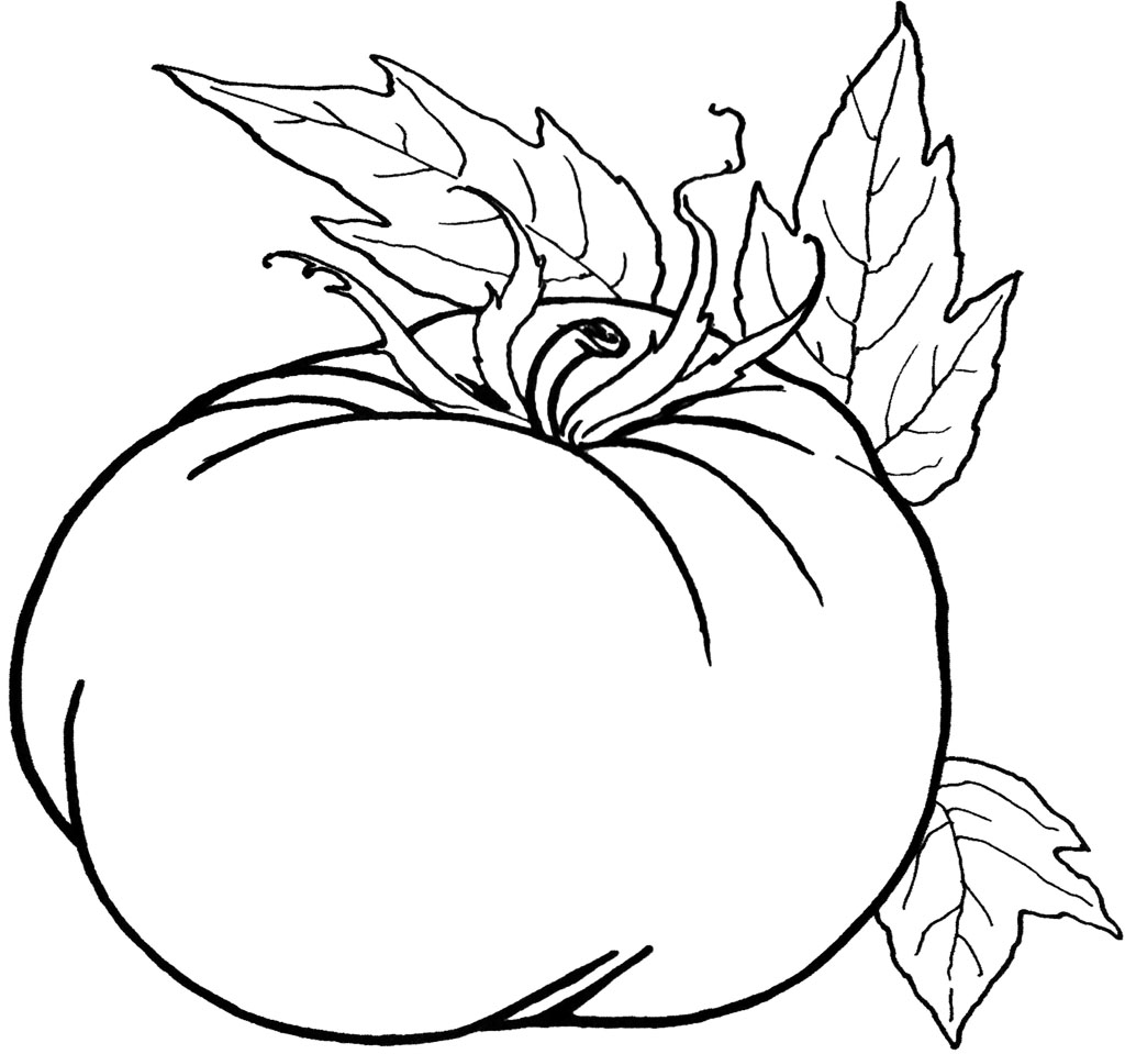 great pumpkin coloring pages - vegetables coloring pictures clipart panda free