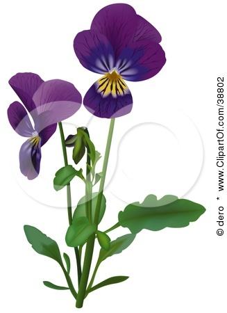 Gallery Viola Flower Tattoo
