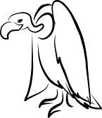 Vulture Line Drawing The gallery for -->...