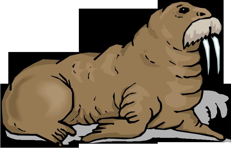 walrus clip art free clipart panda free clipart images rh clipartpanda com walrus clipart images cute walrus clipart