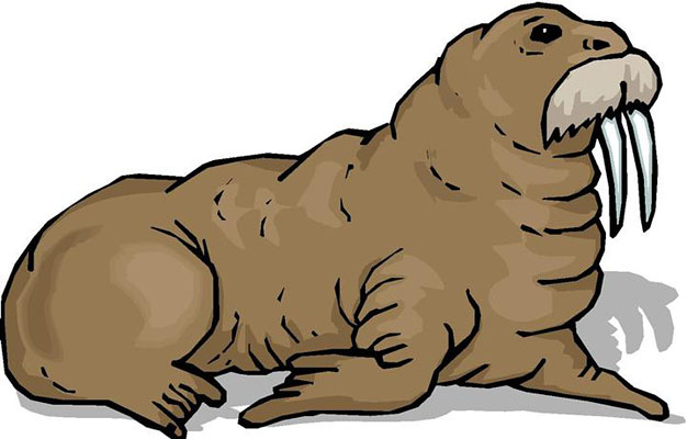 Walrus Clipart Pictures   Clipart Panda - Free Clipart Images