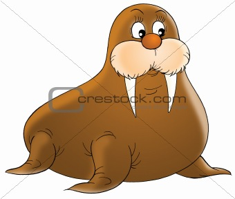 walrus clipart pictures clipart panda free clipart images rh clipartpanda com walrus face clipart cute walrus clipart