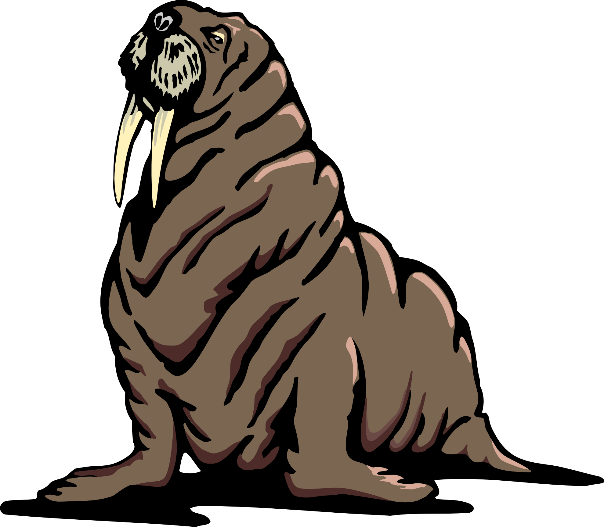 walrus 2 png 158 k clipart panda free clipart images rh clipartpanda com cute walrus clipart walrus clipart black and white