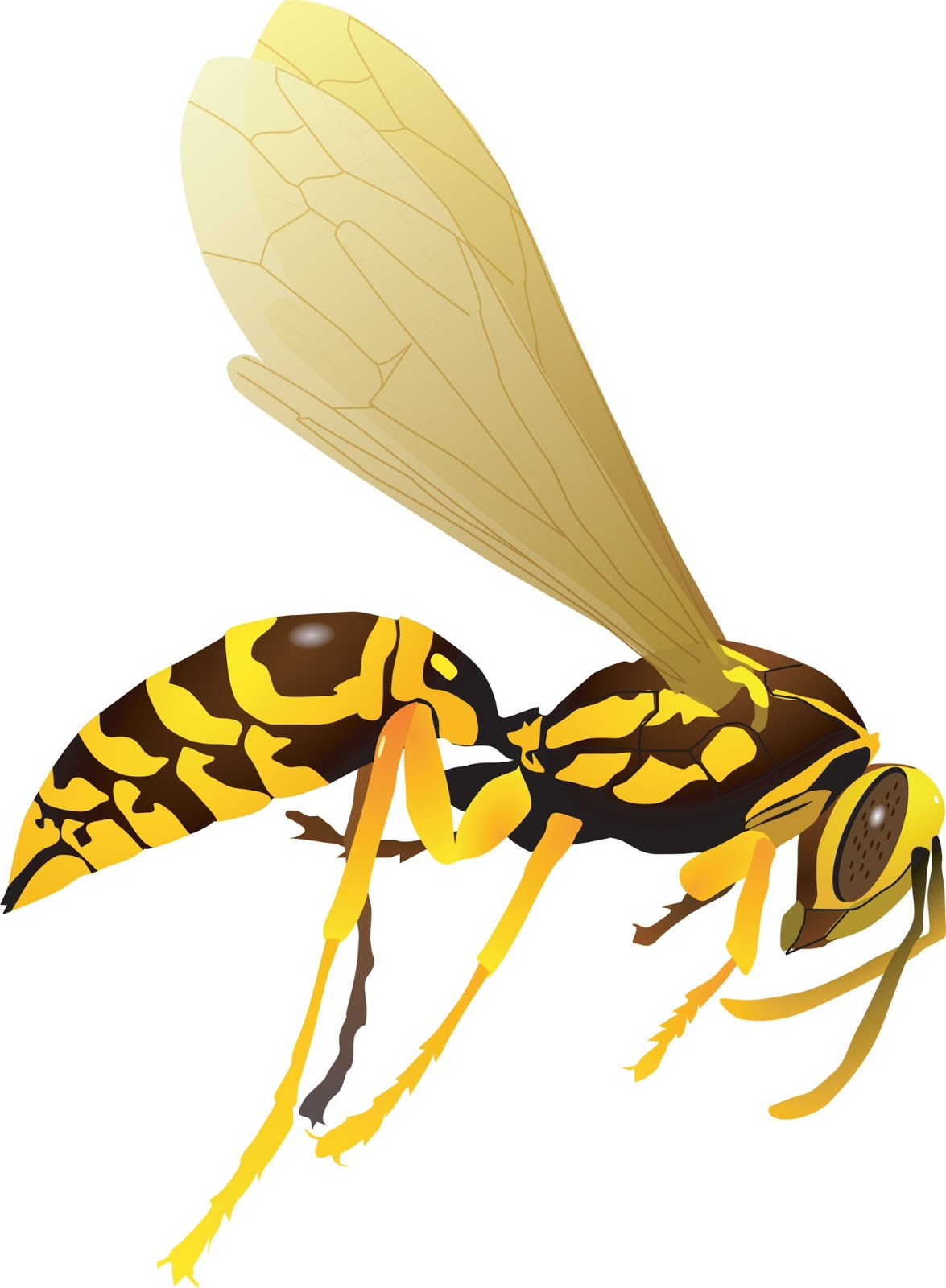 how to get rid of wasp stinging