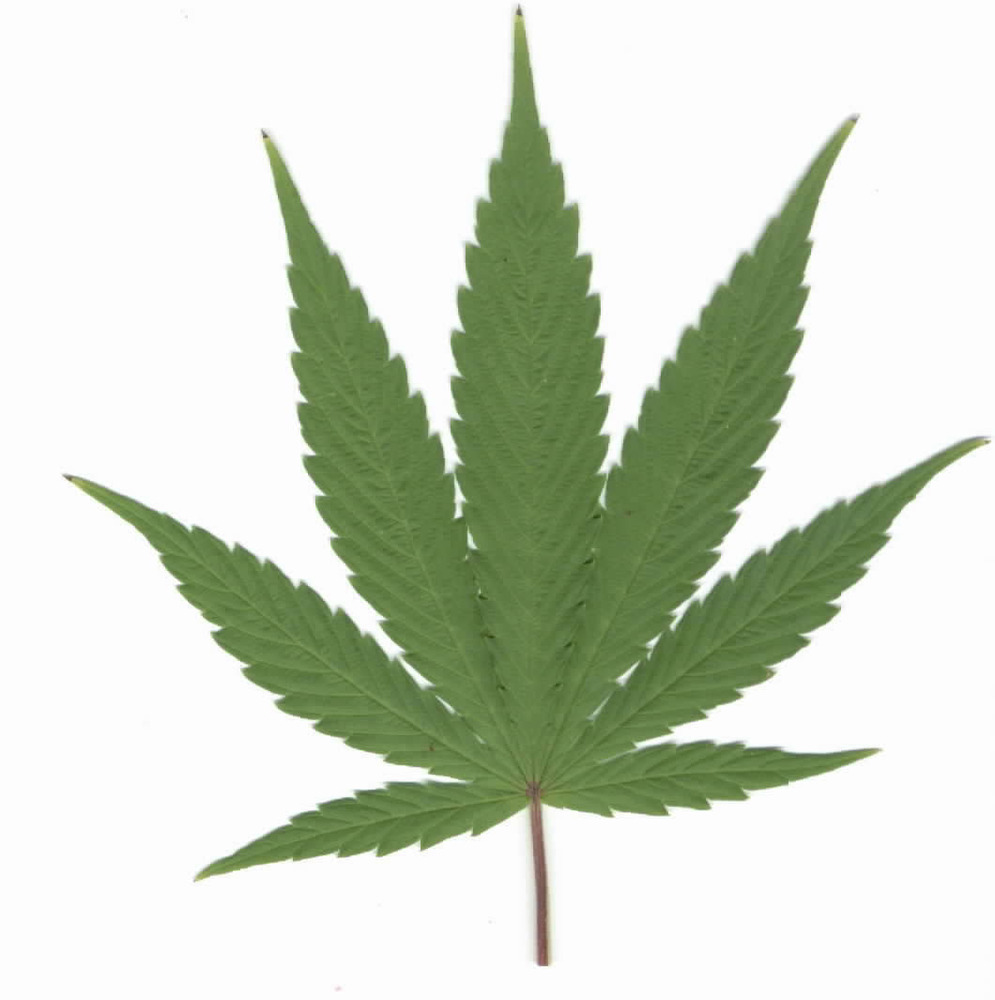 Weed Leaf | Clipart Panda Free Clipart Images