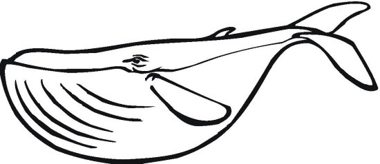 Whale Coloring Pages staruptalentcom