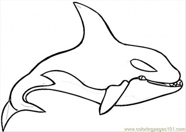 Whale Coloring Pages Clipart