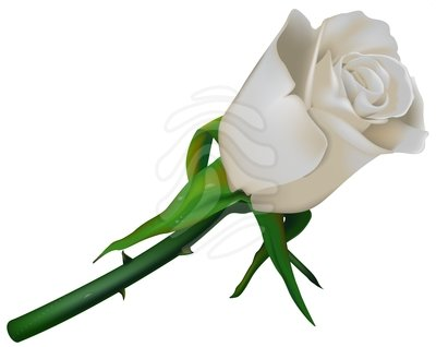clip art white rose clipart panda free clipart images rh clipartpanda com white rose border clip art white rose clip art free