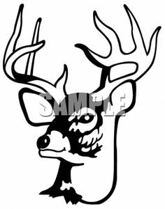 Deer Antler Out Line besides Deer Skull Stencil together with Whitetail Deer Clipart Black And White in addition 2322237284312135 together with Elch Kopf Silhouette Hirsch 40045952. on whitetail deer antlers clip art