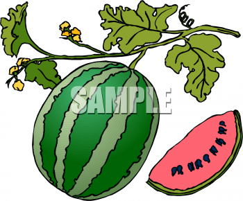 Watermelon Plant Coloring Page