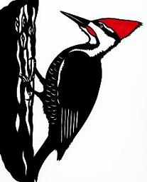 woodpecker clipart clipart panda free clipart images rh clipartpanda com woodpecker clipart black and white downy woodpecker clipart