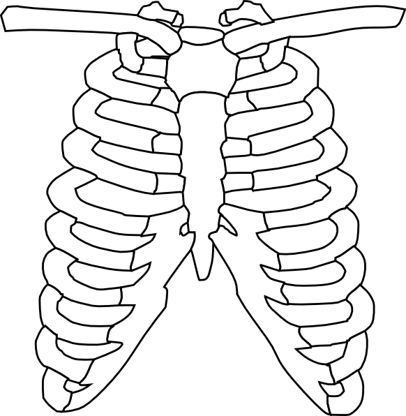 X Ray Line Drawing : Xray clip art clipart panda free images