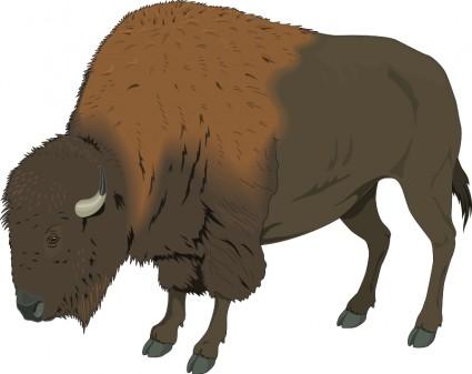 cute bison clip art bison 1 clipart panda free clipart images rh clipartpanda com bichon clipart bison clip art free