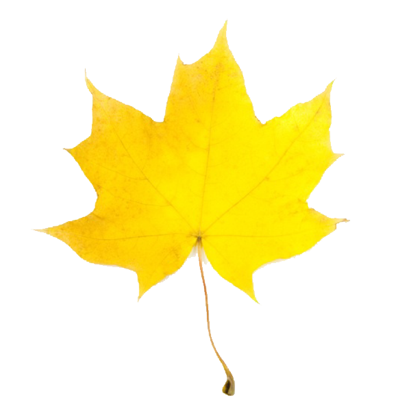 clipart leaves - photo #27