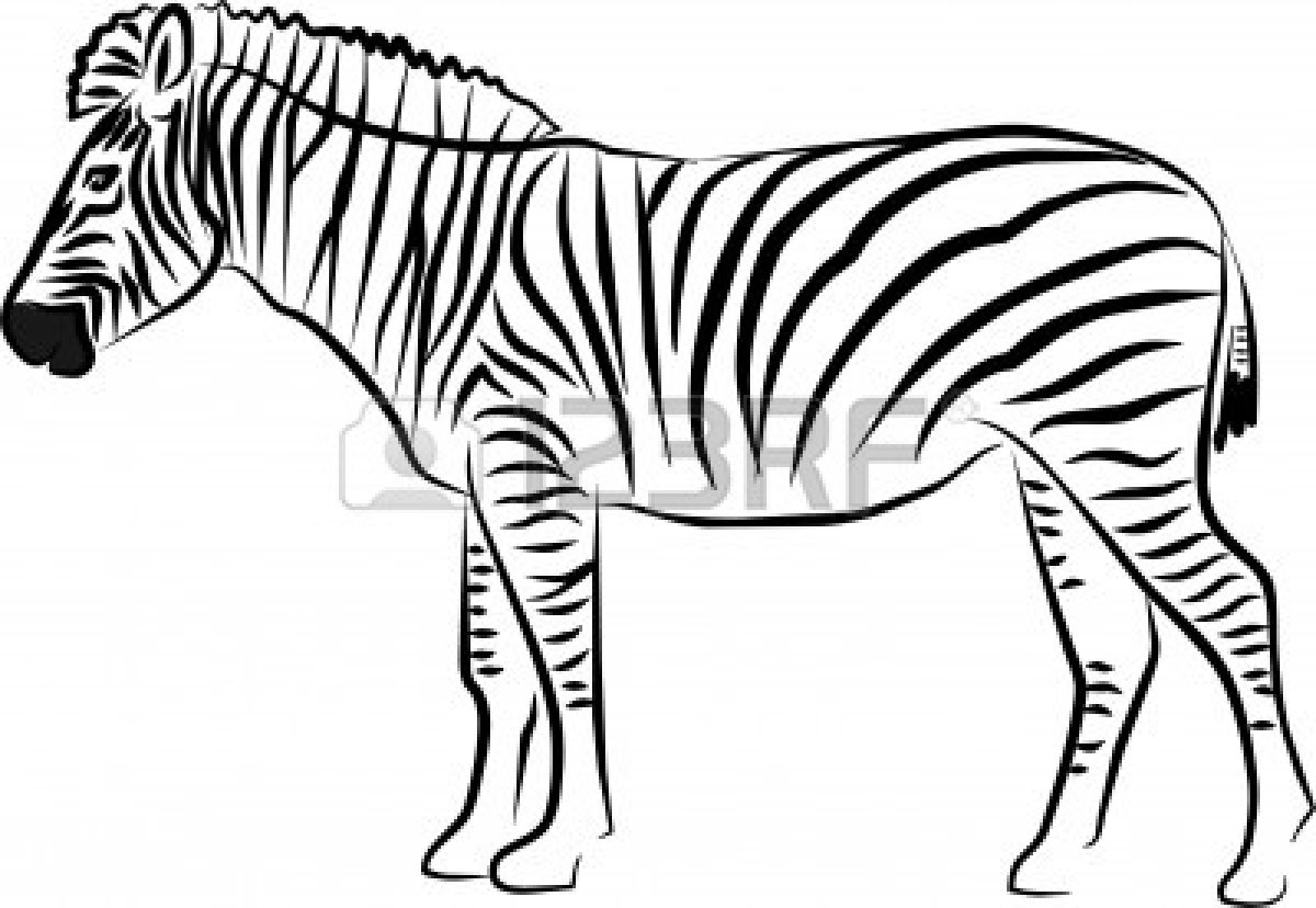 Line Drawing Zebra : Black and white zebra clip art pictures to pin on